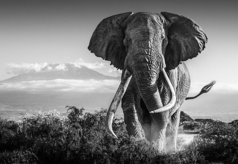 David Yarrow Black and White Photograph - AFRICA
