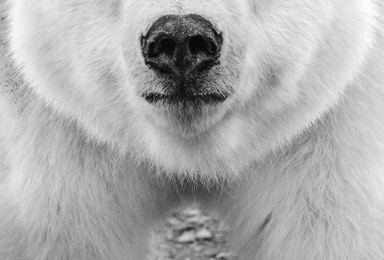 Hello - Gray Black and White Photograph by David Yarrow