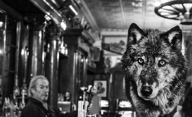 The Wolf Of Main Street II - Photograph by David Yarrow