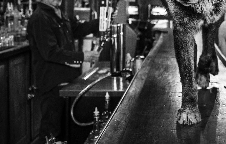 The Wolf Of Main Street II - Gray Black and White Photograph by David Yarrow