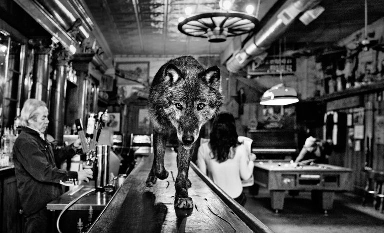David Yarrow Black and White Photograph - The Wolf Of Main Street