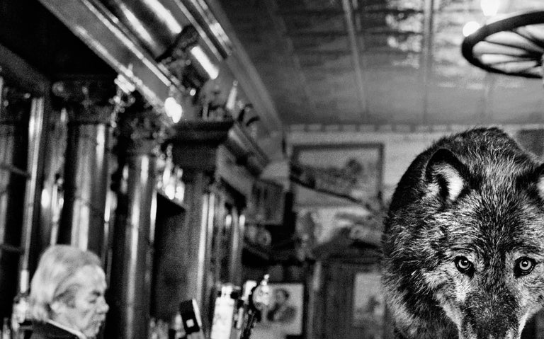 The Wolf Of Main Street - Photograph by David Yarrow