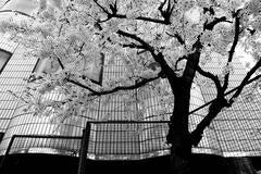 """Tokyo Blur"" series"