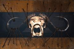 """Barbwire buffalo"""