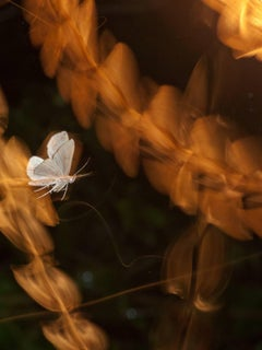 """""""Lift-off"""" by Paul Mutimear, Digital Time Lapse, Nature Photography, Moth"""
