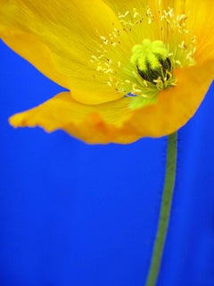 Yellow & Blue Flower Detail, Geoffrey Baris, Nature Photography, Color