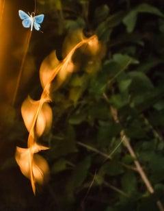 """Passage"" by Paul Mutimear, Digital Time Lapse Photography, Nature, Moth"