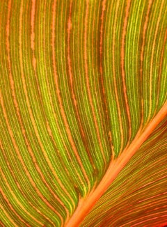 Tropical Plant Leaf Detail, Geoffrey Baris, Nature Photography, Color
