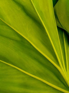 Plant Leaf Detail, Geoffrey Baris, Nature Photography, Color