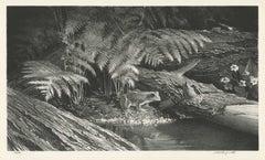 Frog Ferns