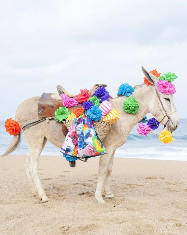 Anne Menke Color Photograph - Happy Donkey