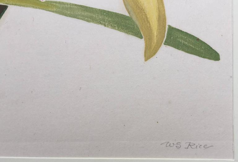ORCHID - Naturalistic Print by William Seltzer Rice
