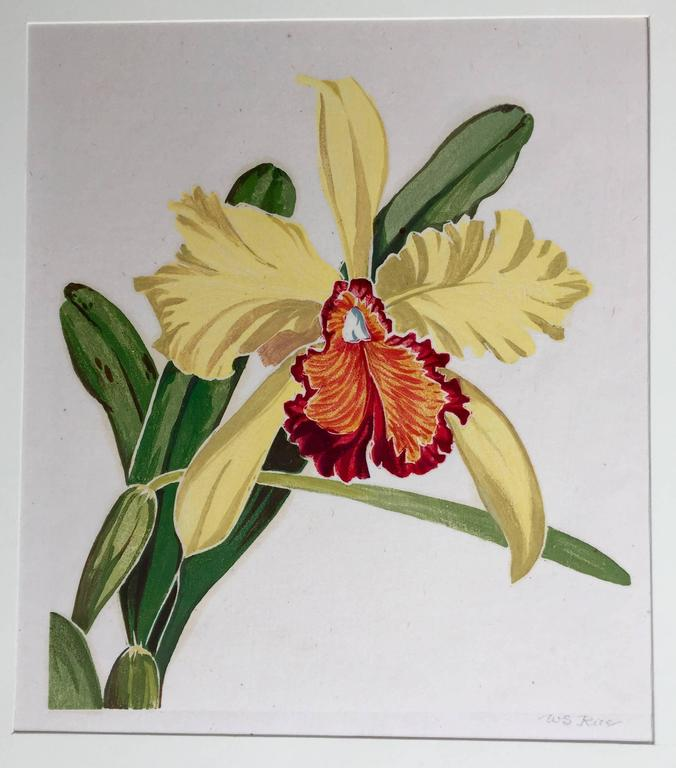 ORCHID - Gray Landscape Print by William Seltzer Rice