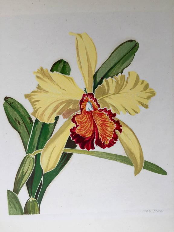 ORCHID - Print by William Seltzer Rice