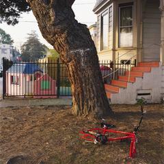 West Oakland Walk: Bike Beneath Tree