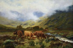 Cattle in the Highlands