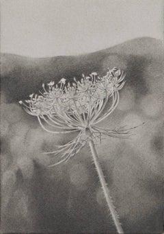 Mary Reilly, Field of Flowers 2, photorealist graphite floral drawing, 2016