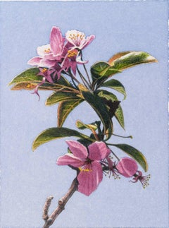 Frederick Brosen, Crabapple Blossom, Realist graphite and watercolor painting
