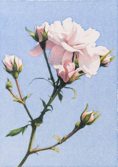 Frederick Brosen, Eight Roses, Realist graphite and watercolor painting, 2016