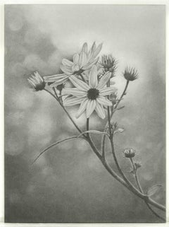 Mary Reilly, Wildflower, Central Park, Photorealist graphite drawing, 2011