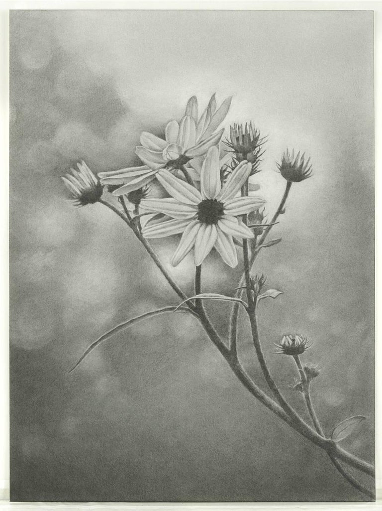 Mary Reilly, Wildflower, Central Park, Photorealist graphite drawing, 2011 - Art by Mary Reilly