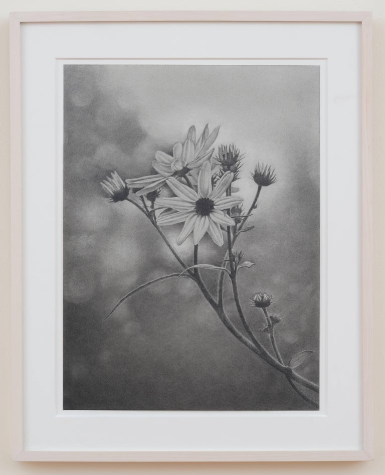 Mary Reilly, Wildflower, Central Park, Photorealist graphite drawing, 2011 For Sale 1