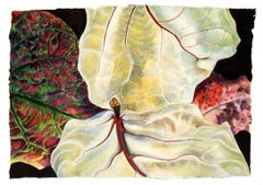 Jan Aronson, Leaves #20, botanical watercolor, 2004