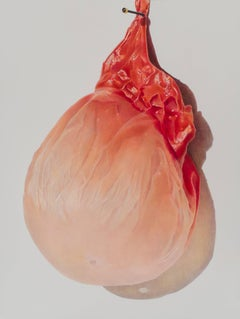 Julia Randall, Pinned Apricot, Photorealist colored pencil drawing, 2013