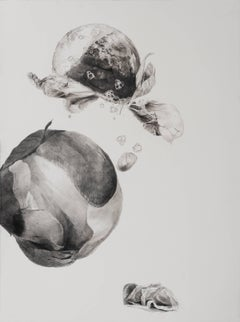 Julia Randall, Dead Flowers 3, Photorealist graphite on paper drawings, 2016