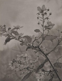 Flowering Hillside, grayscale photorealist graphite landscape drawing, 2018