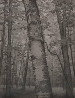 Within the Forest, gray photorealist graphite landscape drawing, 2018