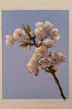 Frederick Brosen, Cherry Blossom, Realist watercolor and graphite on paper, 2018