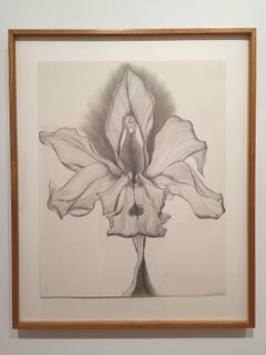 Orchid Transformation #2