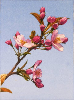 Frederick Brosen, Apple Blossoms, Realist graphite and watercolor painting, 2017