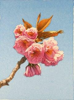 Frederick Brosen, Kwanzan Cherries, Realist graphite and watercolor painting
