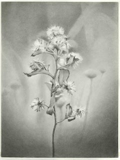Mary Reilly, Wildflower, Jamaica Bay, Photorealist graphite drawing, 2011