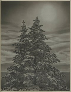 Mary Reilly, Twin Spruce, Photorealist graphite on paper drawing, 2016