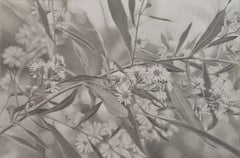 Mary Reilly, Field of Flowers 3, Photorealist graphite on paper drawing, 2016