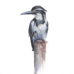 Dina Brodsky, Kingfisher, realist gouache animal miniature, 2018