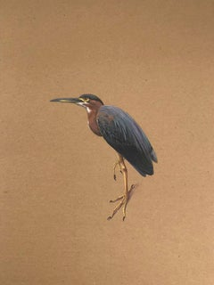 Dina Brodsky, Green Heron, realist gouache on cardboard animal watercolor, 2017