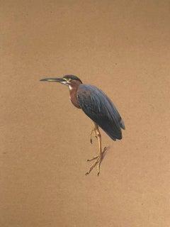 Dina Brodksy, Green Heron, realist gouache on cardboard watercolor, 2017