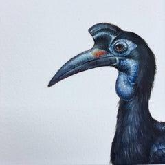 Dina Brodksy, Abysinnian Ground Hornbill, realist gouache miniature, 2018