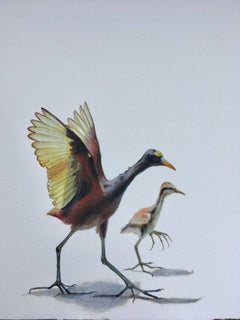 Dina Brodksy, Northern Jacana, realist gouache on paper miniature, 2018