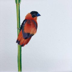 Dina Brodksy, Southern Red Bishop, realist gouache on paper miniature, 2018
