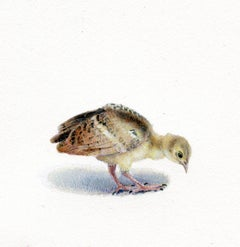 Dina Brodsky, Peacock Chick, realist gouache on paper animal miniature, 2018