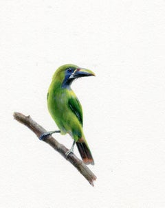 Dina Brodsky, Green Bird, realist gouache on paper animal miniature, 2018