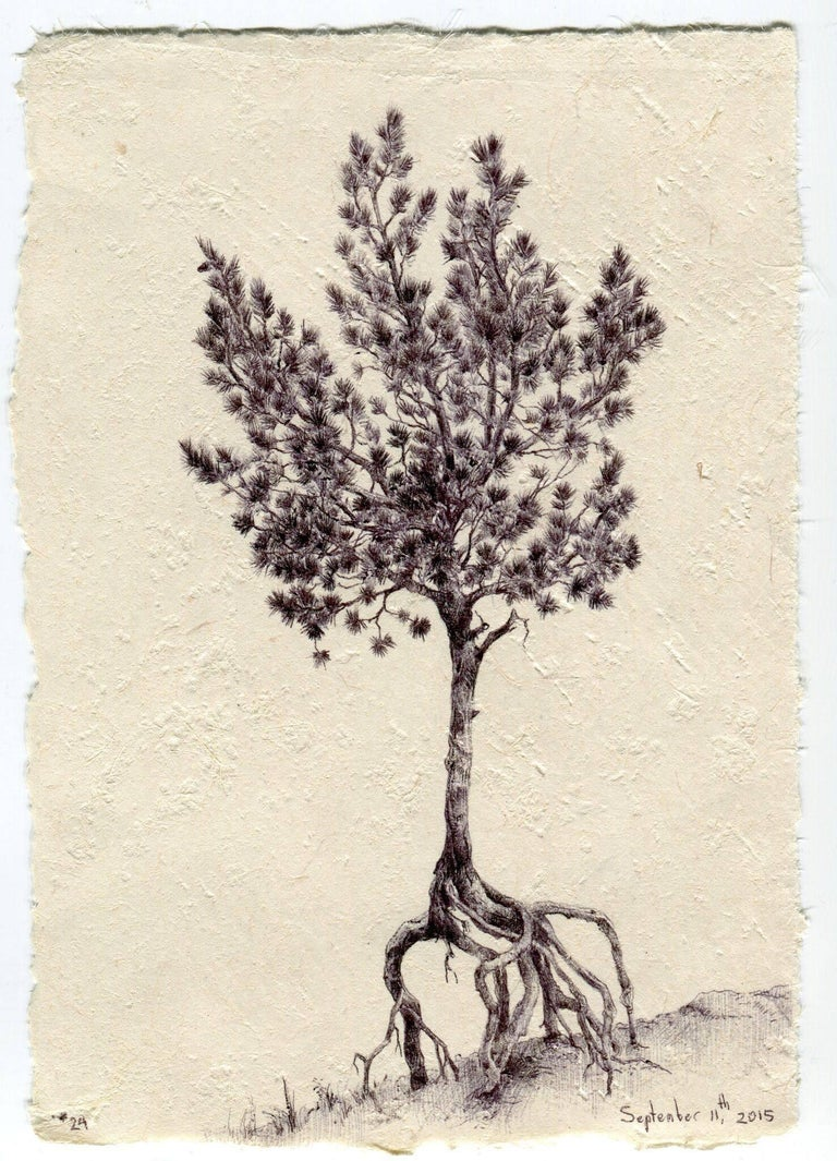 Framed: 10.5 x 10.5 in.  In her drawing, Tree No. 24, September 11, 2015, Dina Brodsky uses ink to emphasize the textures of the tree bark and its foliage. By working strictly in black and white, Brodsky is able to attend to the peaks and valleys of