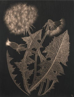 Margot Glass, Two Dandelions with Bud, realist goldpoint still-life, 2019