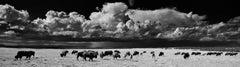 Panoramic Photography; 'Buffalo'