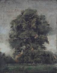 Un arbre à Hyde Park